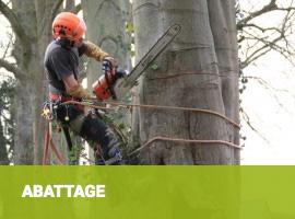 élagage soin des arbres